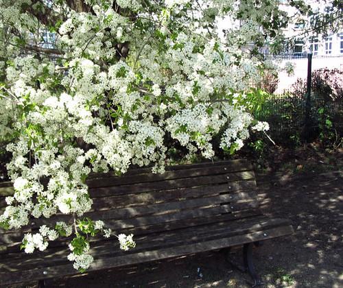 Under the blossoms. Photo: Ulla Hennig
