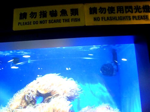 a2 do not scare the fish