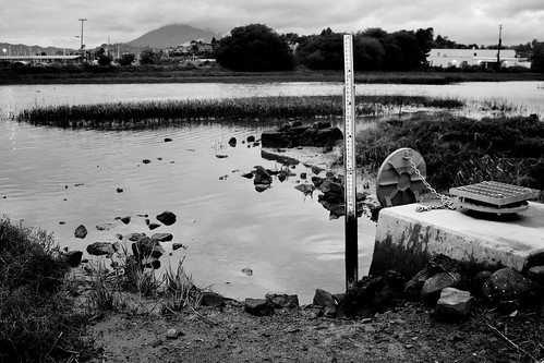 Pond in B&W