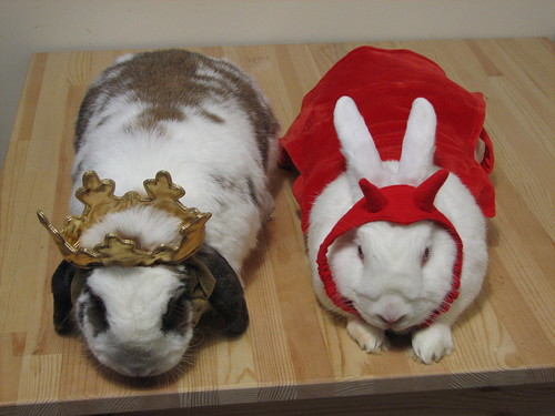 the buns in costume from above
