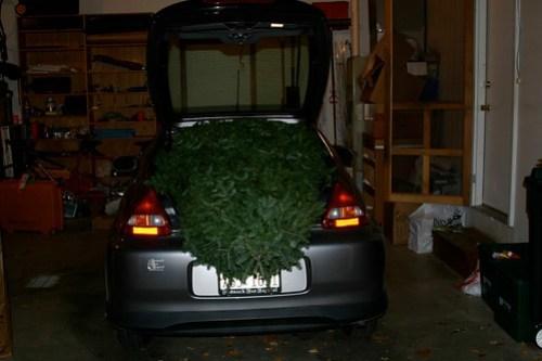 Iris with Christmas tree