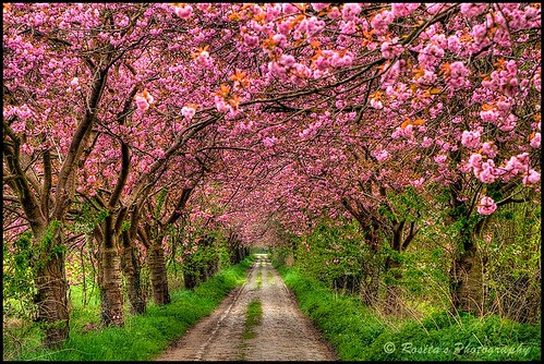 """""""The color of Spring"""" by Damona-Art"""