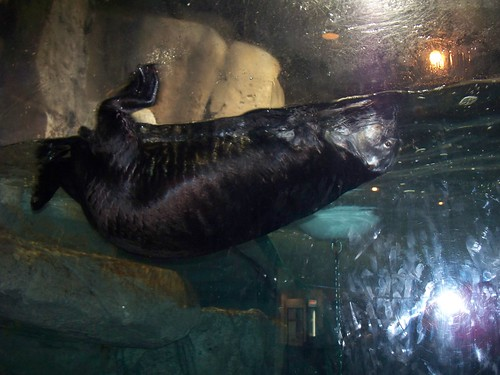 Think its hard to take a picture of a turtle? Try the flippin otters.