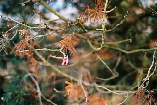 Clothespin tree