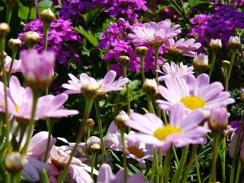 Visiting Grennesminde Garden Centre