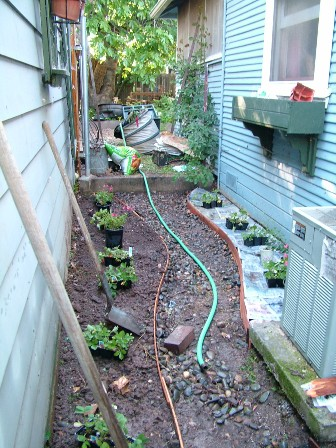 Side yard (strawberry fields). Facing fig tree and rest of back yard.