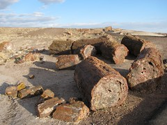 Petrified Forest National Park-32
