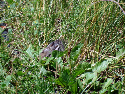 bunnies 7-5-2009 2-06-03 PM