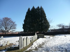 Tombstones with trees