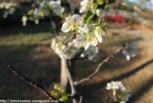 flowering_tree