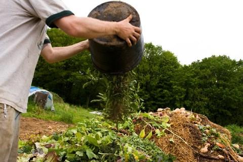 หลักการของการทำ เกษตรอินทรีย์