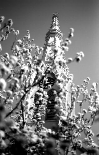 Bradford Pear/Church. (Ilford Delta 100. Nikon F100. Epson V500.)