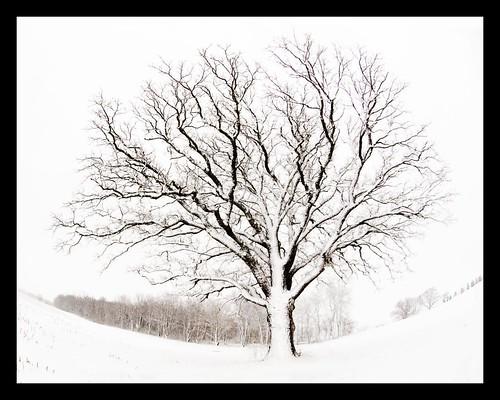 The Tree 55