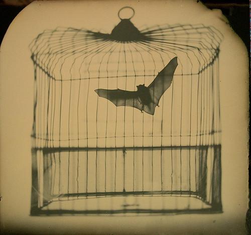 ©2009 Phillip Nesmith - 19x18 dry plate ambrotype