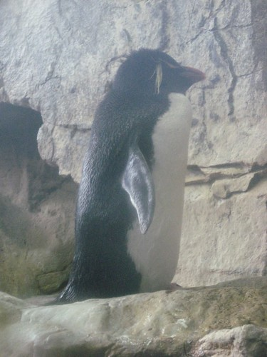 Deleted scene from The Blair Witch Penguin.