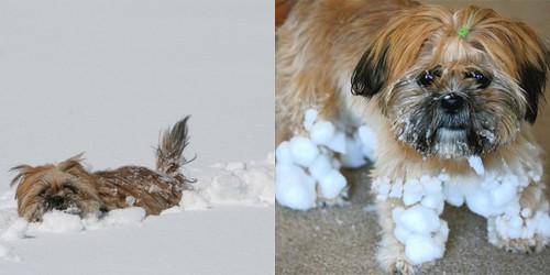 Frito vs. the snow