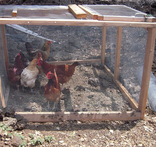 CLOSER VIEW OF CHICKEN RUN