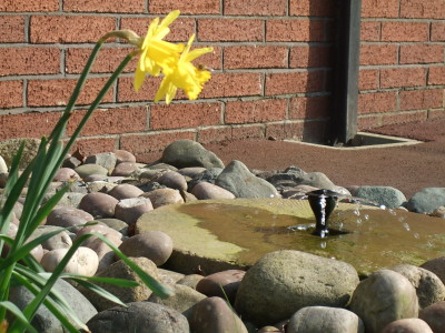 daffodils around a millstone with a fountain in the middle.