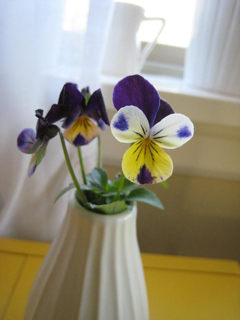first spring violets