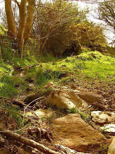 The stone cluttered small stream