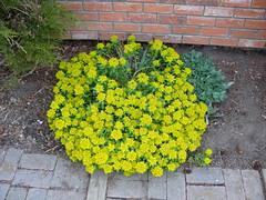 Garden of Aton 2009 - 42