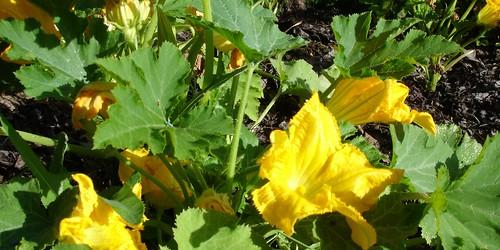 zucchine ripiene 0_2009 08 01_1819