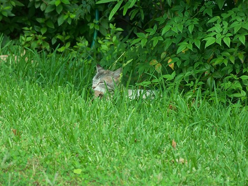 Tuffy of the jungle