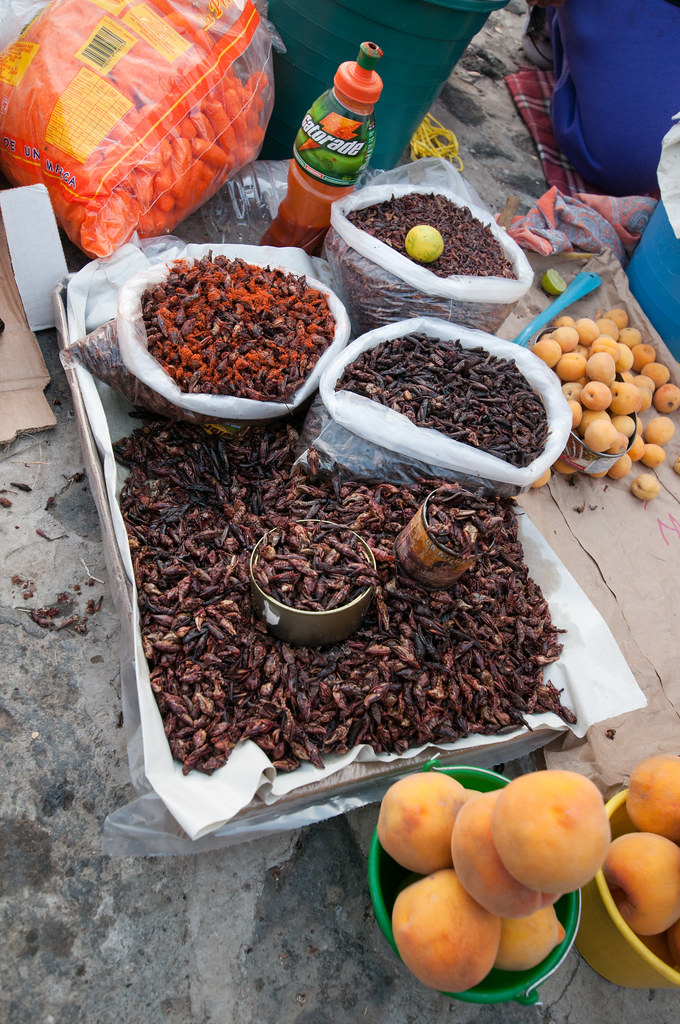 Crickets for sale to eat
