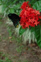 Butterfly eats 2