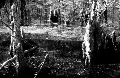 Infrared Swamp. (Ilford SFX — R72 Filter. Nikon F100. Epson V500.)