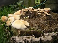 funghi in giardino