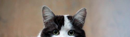 cat-photo