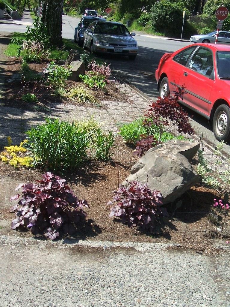 Tidy new parking strip garden