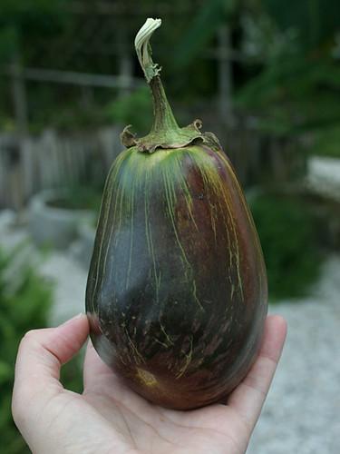 Bad-Eggplant