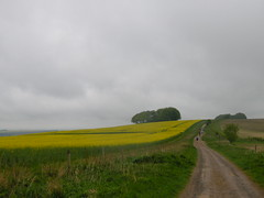 Walkers on the Ridgeway