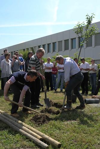 A tree grows in Rueschlikon