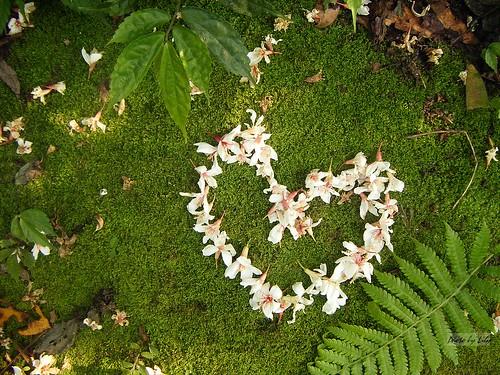 草地上的白色愛心。