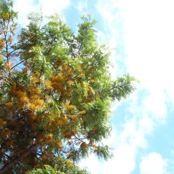 #332 - Tree