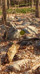 circle of moss