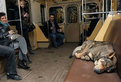 Russian Stray Dog Riding Subway