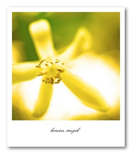 Lemon Angel
