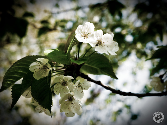Primăvara la Rohia