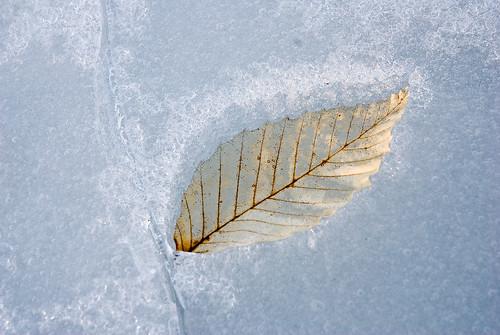 Empreinte de feuille - Leaf track