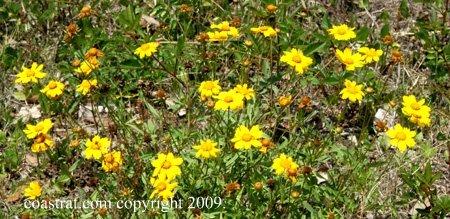 DSC_0027ABCD-YellowWildFlowers-1