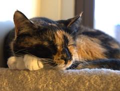 Slumber Cat Overhead