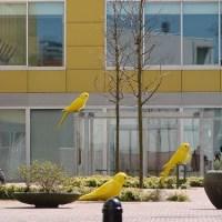Big Yellow Birdies and Buildings