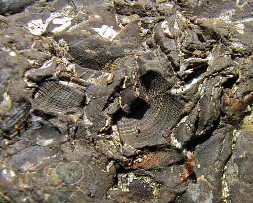 fossil rocks in creek