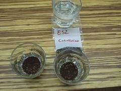 Esmeralda cupping at CCCNYCTC