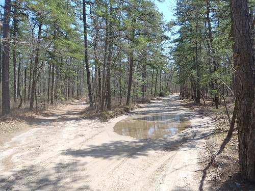 The beautiful New Jersey Pine Barrens in the Wharton State Forest