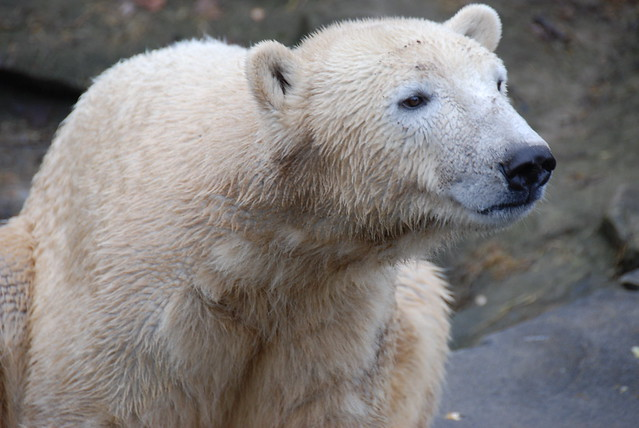 Sad Knut